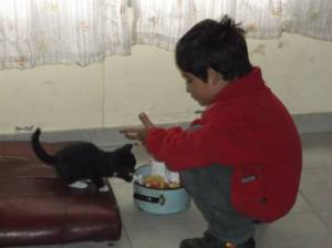 Students who struggle to feed themselves have cats