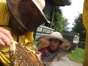 Bees and the beekeeper