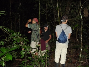 Night hunting with the loony botanists