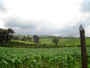Corn fields on the way to Pasochoa