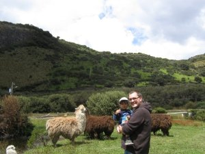Llamas and Andes on the way to Papallacta