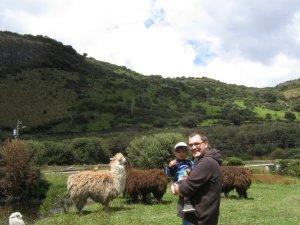 Llamas and Andes on the way to Papallacta