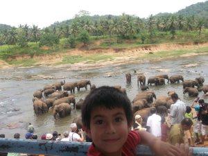 loads of elephants, even more people at Pinawela