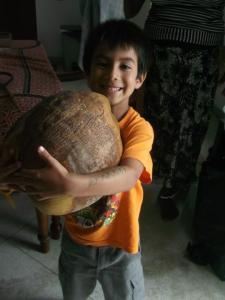 A coconut that fell from a tree in our garden